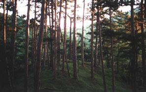 Альпийские лес
