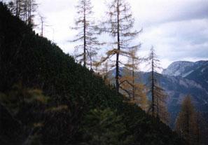 Лес в Австрийских Альпах