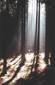Австрия, лес